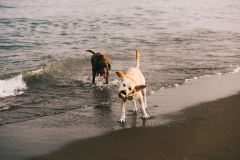 dogs playing with a ball in the beach
